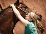Chiro-Vet Chiropraktik für Pferde und Hunde Mag. Cornelia Himmler
