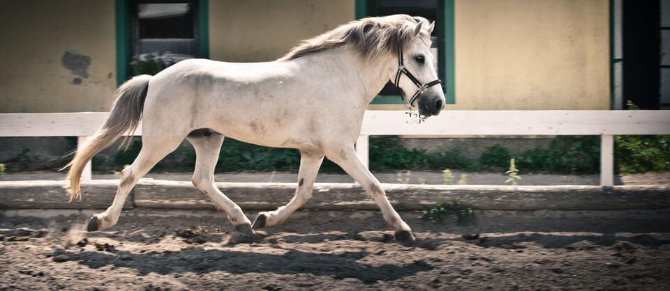 Chiropraktikerin für Pferde | Chiropraktik Pferde Sport Wien | Tier - Chiropraktiker