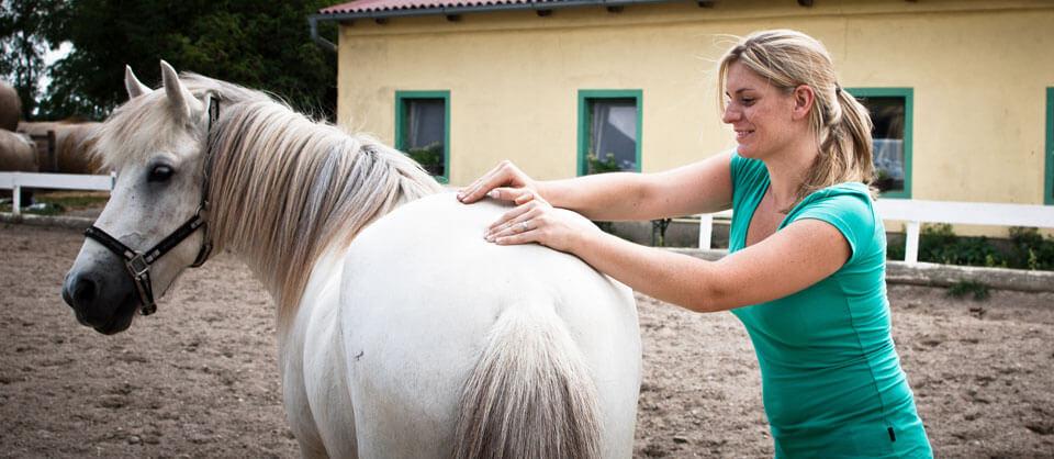 Chiropraktikerin für Pferde | Chiropraktik Pferde Sport Wien Niederösterreich | Tier - Chiropraktiker